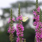 The Bee and the Butterfly by Marriet