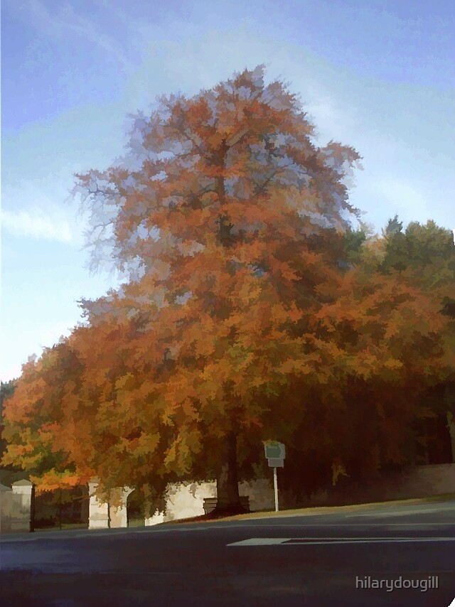 treated copper beech at Raby by hilarydougill