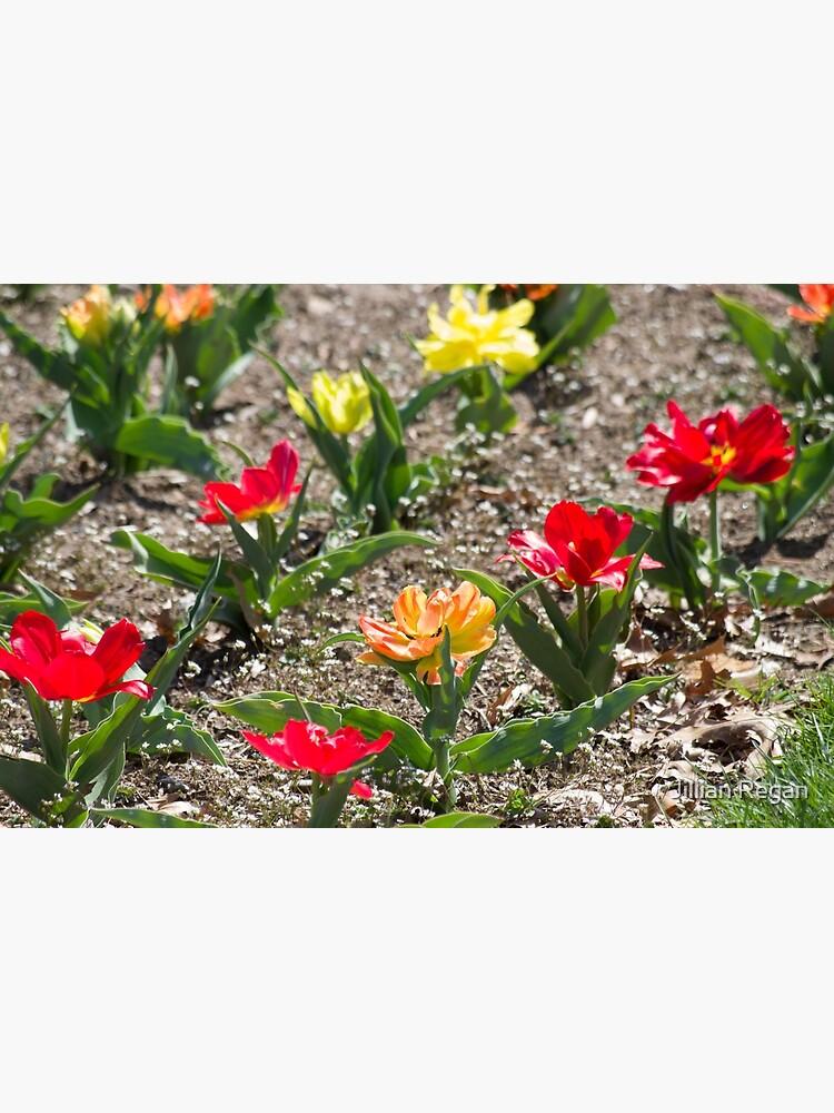 Red Orange Yellow Flowers in Garden by JillianRegan