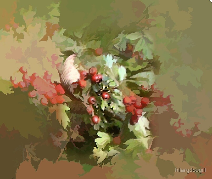 Hawthorn Berries by hilarydougill