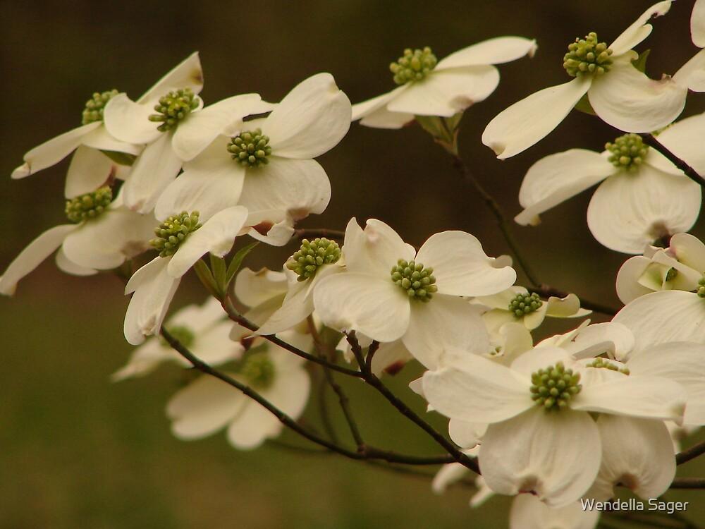 White Dogwood by Wendella Sager