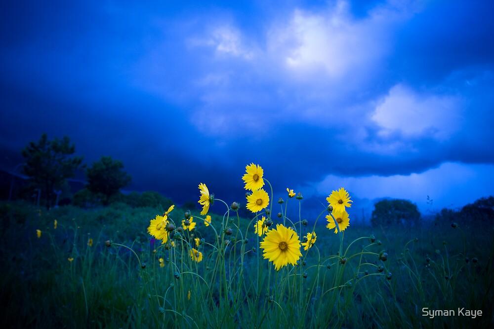 Yellow Flowers Blue Sky  by syman