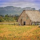 Tobacco Curing house in Vinales by Yukondick