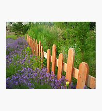 Picked Fence Photographic Print