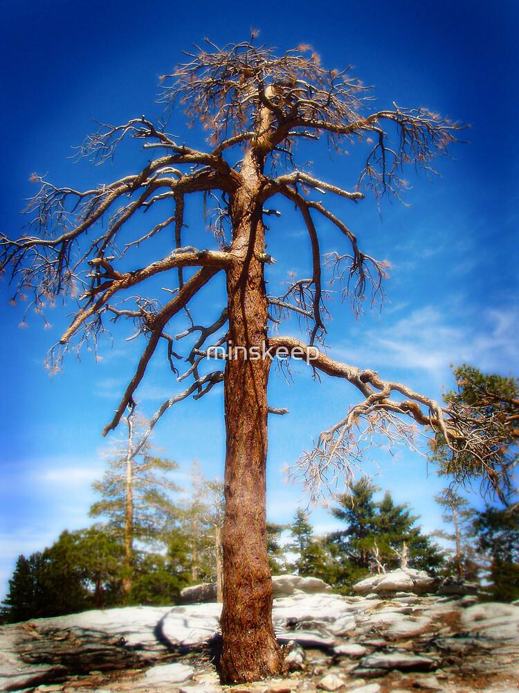 Dead Tree by minskeep