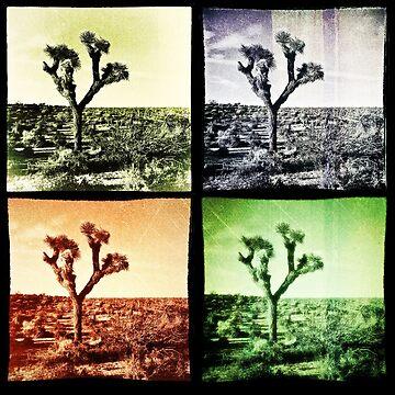 Joshua Tree Quad by pberggr1