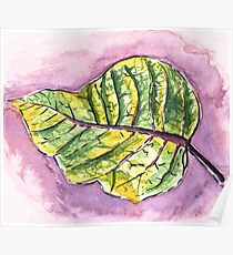 Leaf Study Ink and Wash Poster