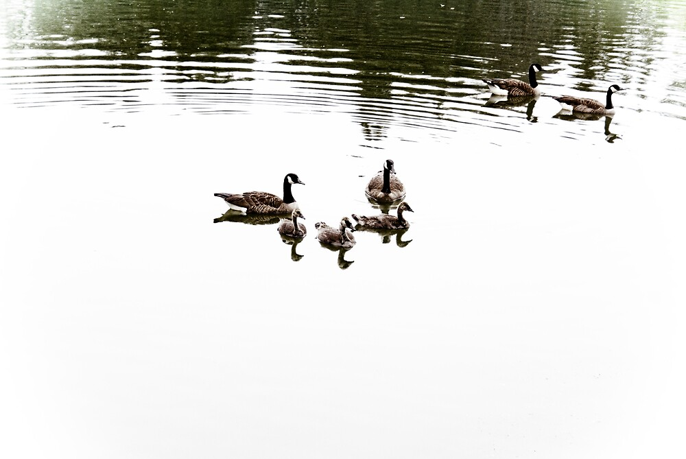 Floating by Rod  Adams