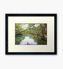 Homosassa Springs Framed Print