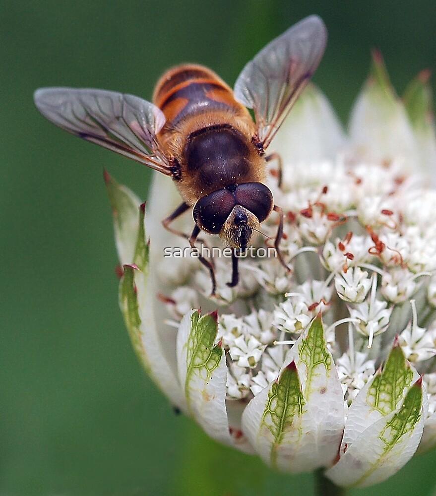 Bee by sarahnewton