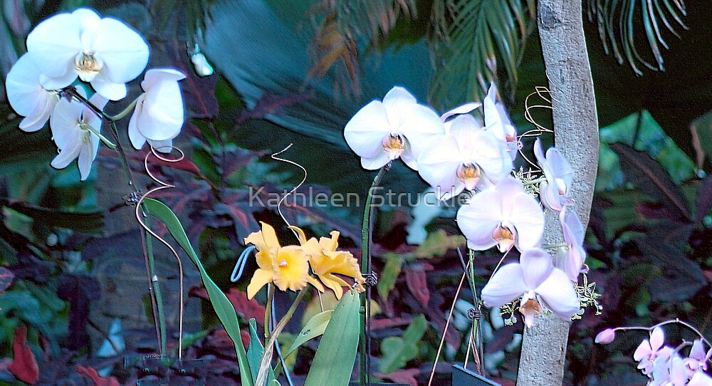 Orchid Dancers by Kathleen Struckle