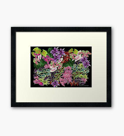 Plants (2747 views) Framed Print