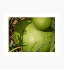 Grasshopper on Gourd Art Print