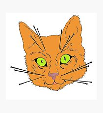 Cat's Whiskers Photographic Print
