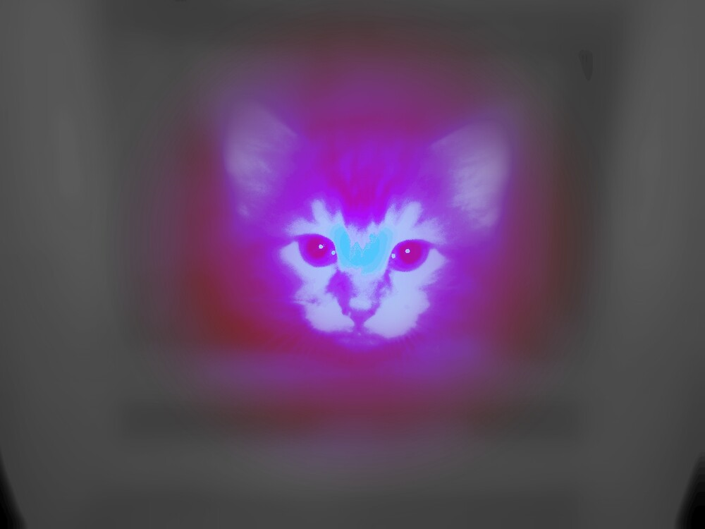 disco cat revised by Jeremie gaudreault