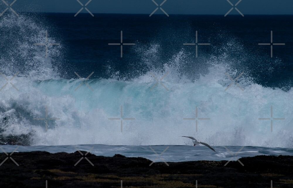 Fly upon a wave by Lanii  Douglas