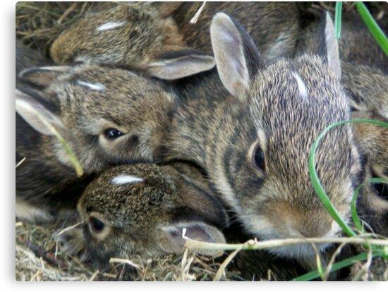 Baby Bunnies by alina98