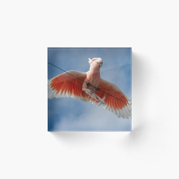 Major Mitchell's Cockatoo (Pink Cockatoo) ~ Circus Act Acrylic Block