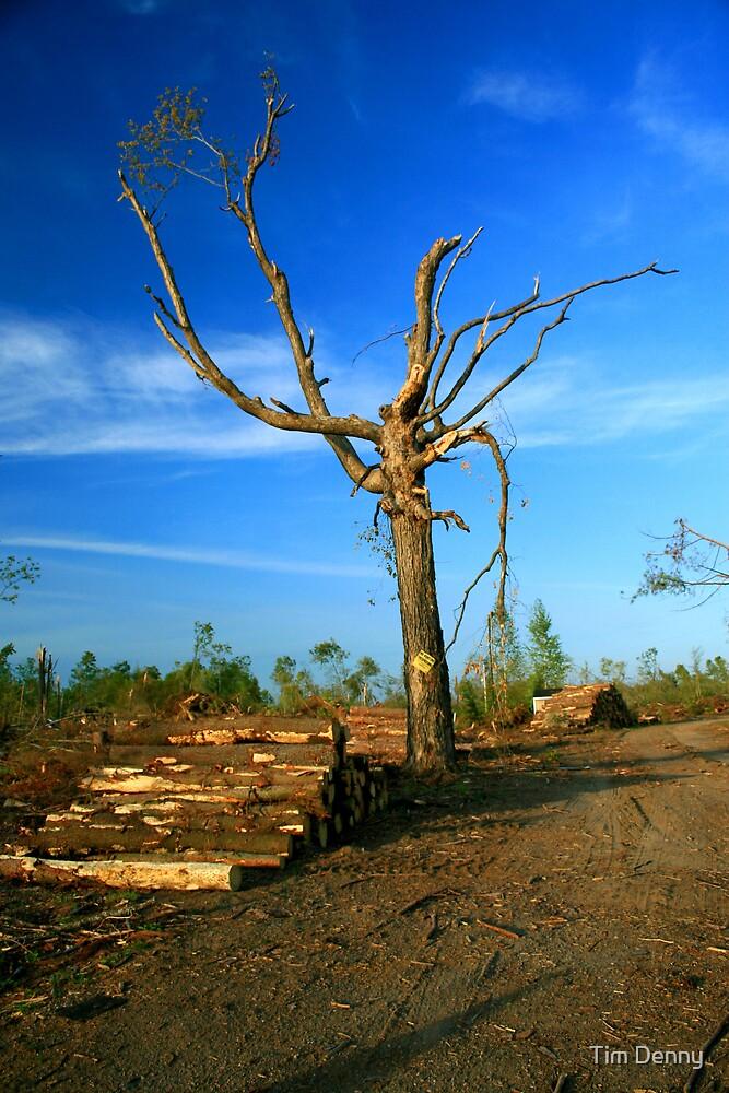 The Lone Oak by Tim Denny