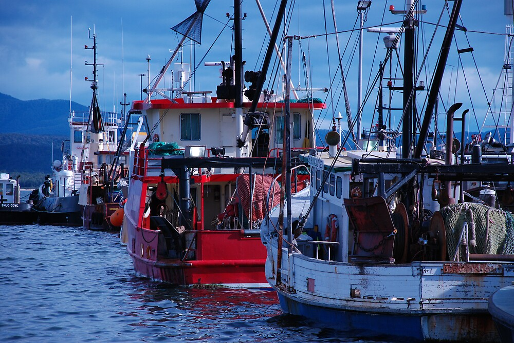 Eden fishing boats by Carol  Buchanan