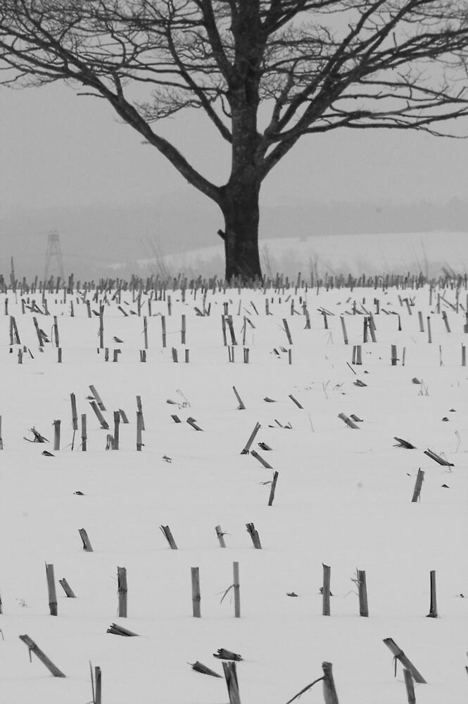 Snowy Field by Sandy  McClearn