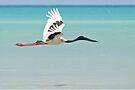 Black-necked Stork ~ Freedom Is  by Robert Elliott