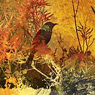 Autumn Honeyeater by Karyn Fendley
