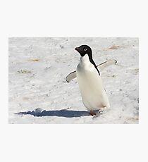 "Adelie Penguin  ~  ""The Dancer"" Photographic Print"
