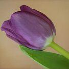 Mauve Tulip Resting on Its Leaf by Gerda Grice