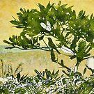 Fern-leafed Banksia by Karyn Fendley