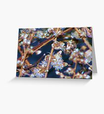 Winter Jewels Greeting Card