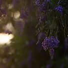 Fading sunlight by Danielle Espin