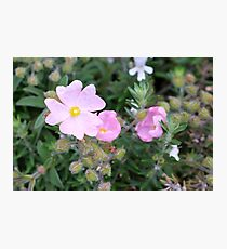 Pale Pink Flower Photographic Print
