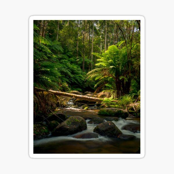 Toorongo River, Yarra Valley Sticker