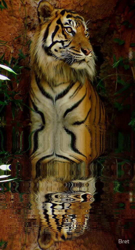 Water Cat by Bret