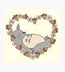Sleeping Totoro Photographic Print