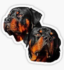 Rottweiler Dog Portrait Sticker