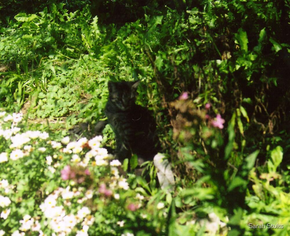 KItten in the garden  by Sarah Stults