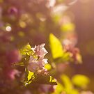 Soft light by Danielle Espin