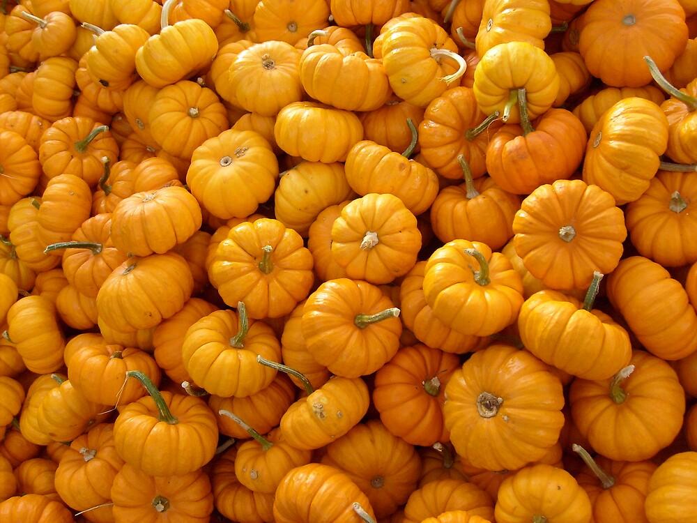 Mini Pumpkins by MelindaUSA79