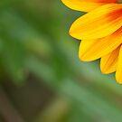 Little sunshine by Danielle Espin