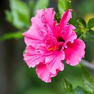 Pretty and Pink by Danielle Espin