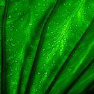 back lit green palm leaf by srphotos