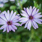 Purple flowers by Danielle Espin
