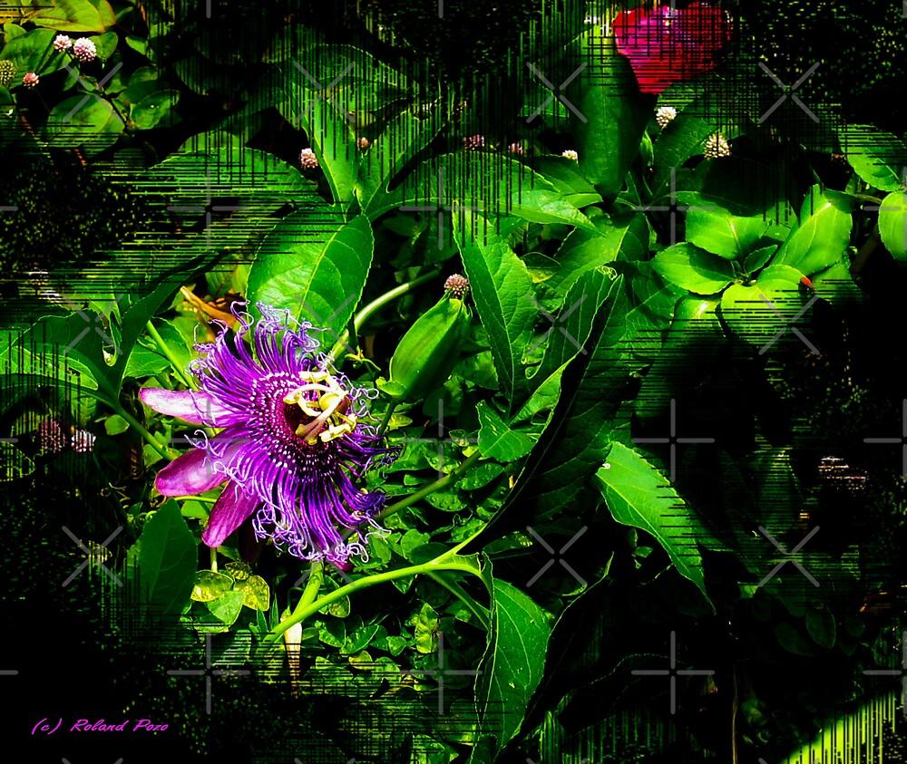 What is it? by photorolandi