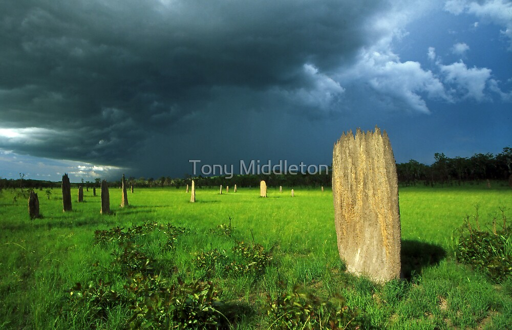 termite storm by Tony Middleton