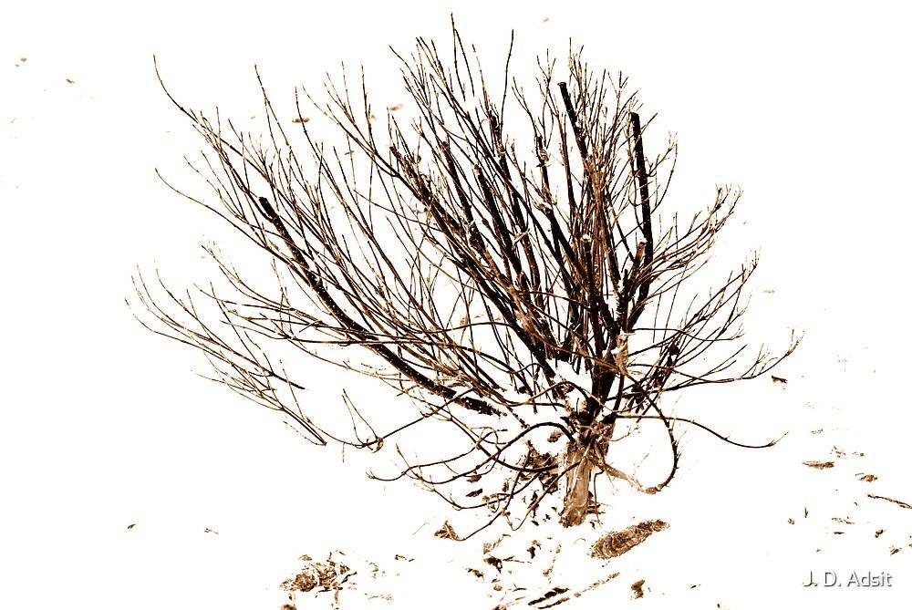 Winter's Foliage by J. D. Adsit