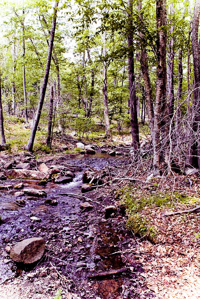 On The Creek Series #2 by Rod  Adams
