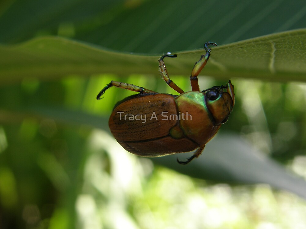 hang in there by Tracy A Smith