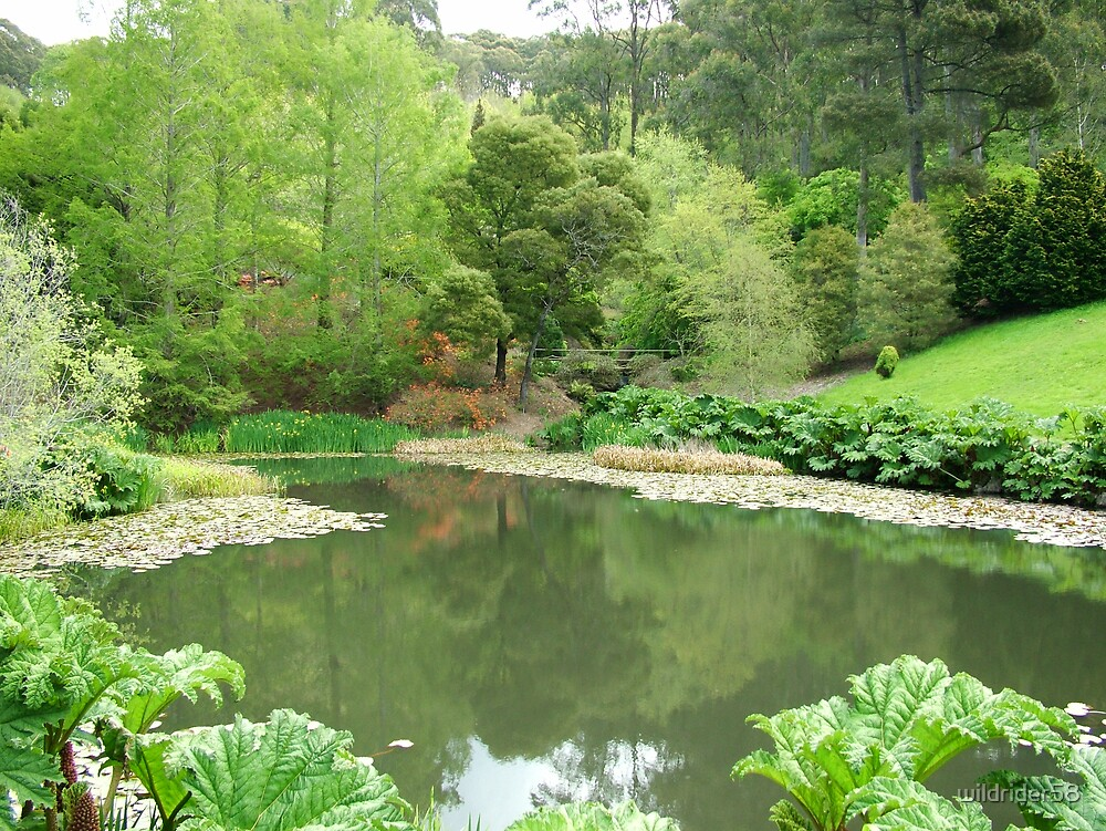 Mt Lofty botanical garden S.A  by wildrider58